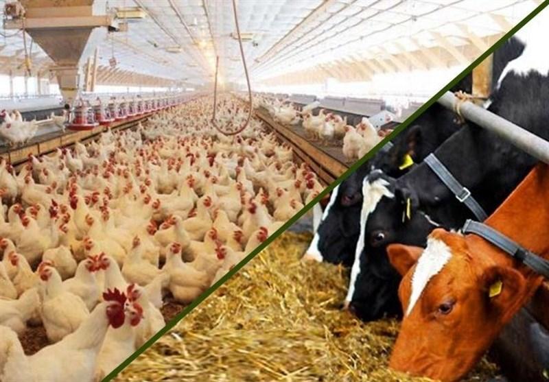 نرم افزار کنترل تولید و قیمت تمام شده کارخانجات خوراک دام و طیور